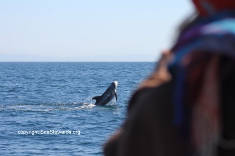 Sea Worthy--SFBayWhaleWatching Trip Reports and Images: White ...