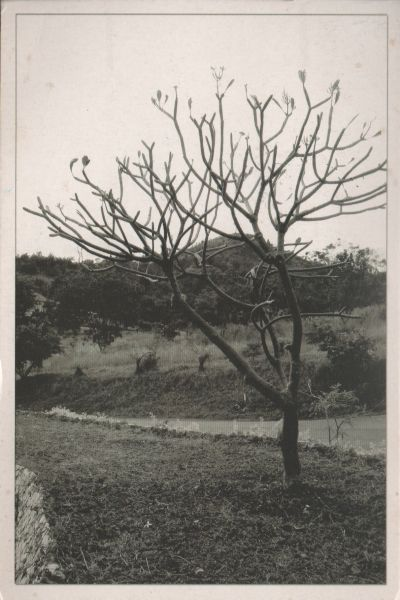 black and white picture of an almost bare tree