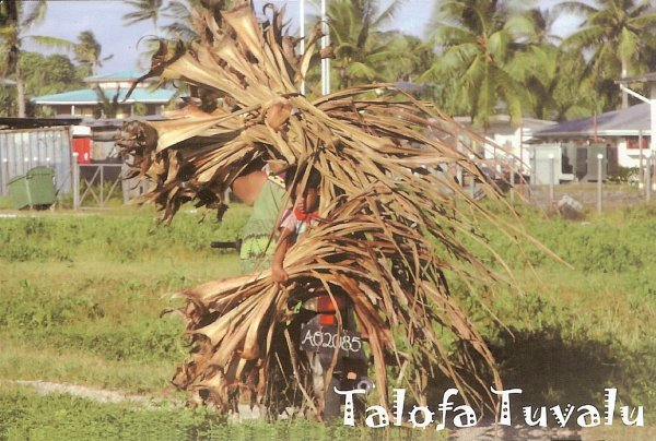 family gathering dried pandanus leaves, Tuvalu