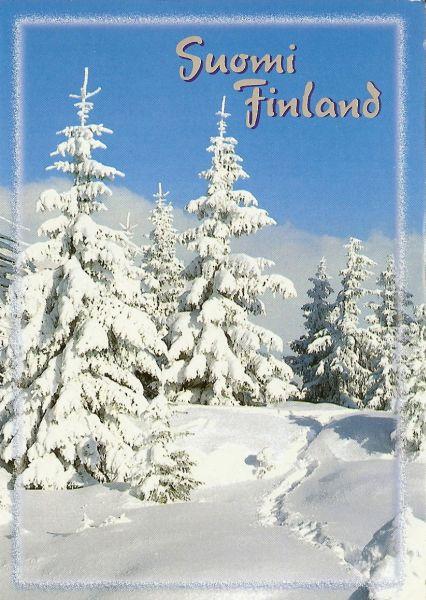 heavy snowfall on fir trees