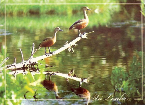 water birds perched on branches reflected in water