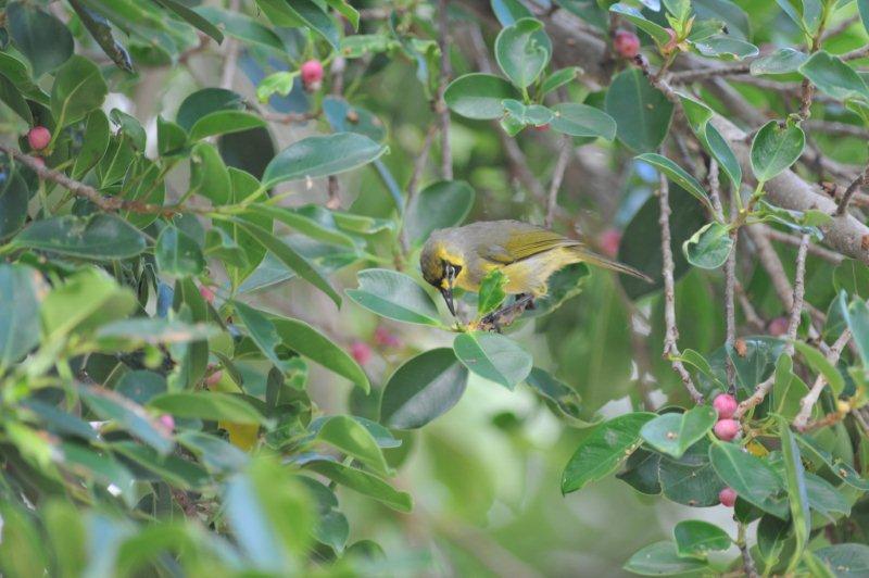 日本野鳥の会東京 研究部ブログ