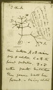Phylogenetic Tree from Charles Darwin's Notebook