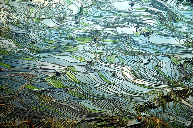 Terasasta polja  Terasasta-polja-pirinca-3