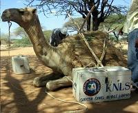 GARISSA CAMEL BOOK PROJECT