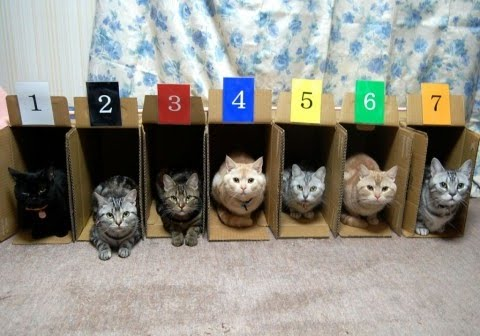 cute kitten organize cat pic