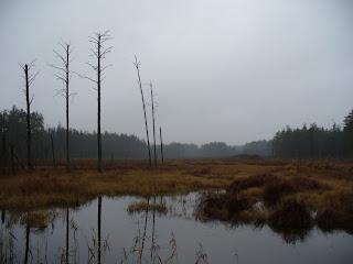 foto: polesia bogs wetland