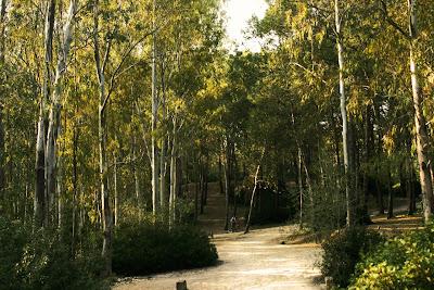 Parque forestal de 'Las Aguilillas'