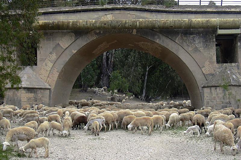Pastoreo bajo el puente de Cartuja