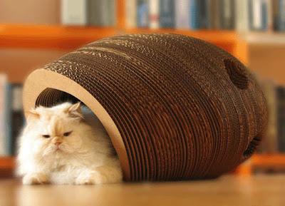 http://4.bp.blogspot.com/_jZHHRfnq9F8/SzmgrJFcDEI/AAAAAAAAK0s/wsYYpvemfVA/s400/Cat+Bed.jpg