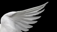 Con sus plumas te cubrirá,