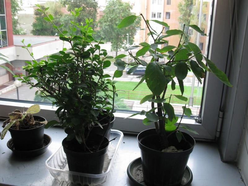 Piante da ufficio piante da ufficio ildorico 18 agosto - Piante per ufficio ...