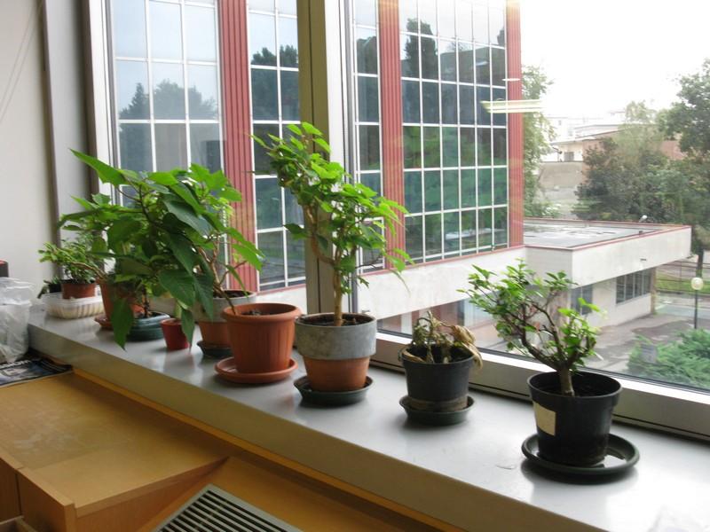 Ildorico 08 settembre 2010 piante da ufficio - Pianta da ufficio ...