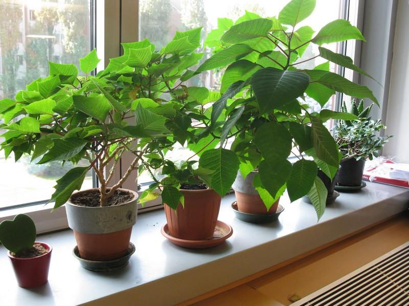 Ildorico 27 ottore 2010 piante da ufficio - Piante da ufficio resistenti ...