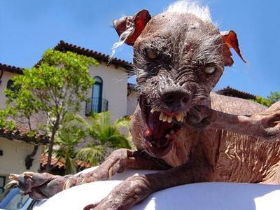 The Name Of Dog Is Sam Former Holders Le World S Ugliest There Some Creepy Dogs But They Aren T As Scary