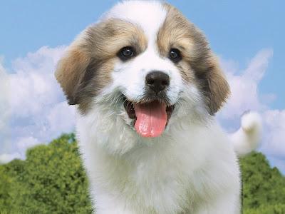 Happy Dog Wallpaper | Free Dog