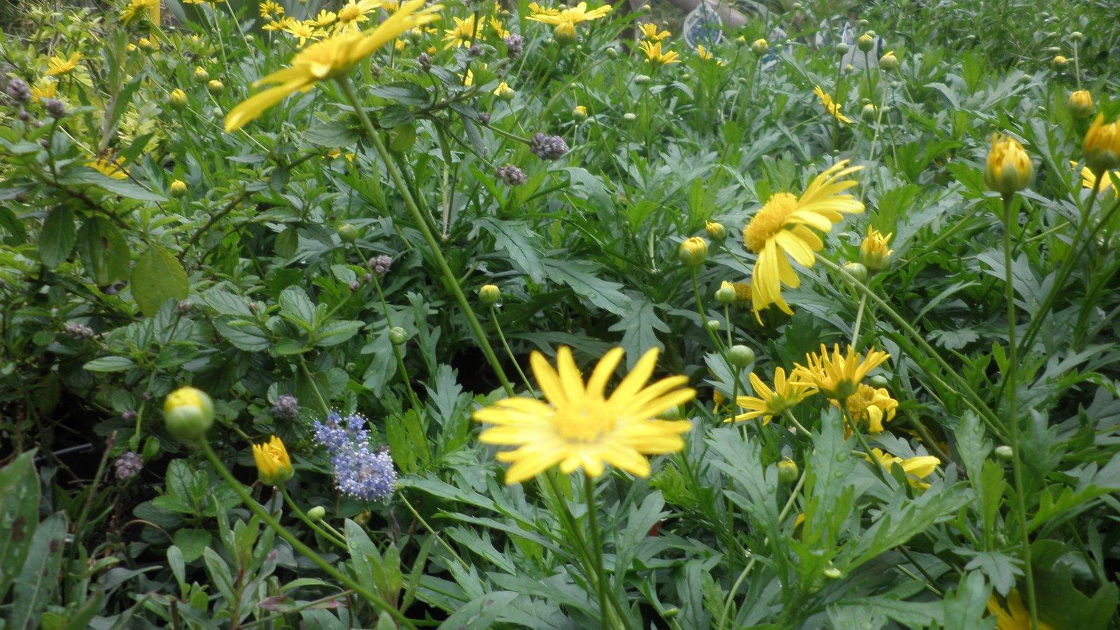 Por su floración,resistencia,combinación con otras,bajo