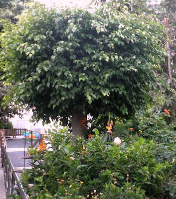 jardinbio: plantas y especies para jardines en mÁlaga