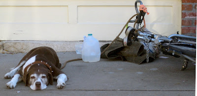 Image of dog with bicycle