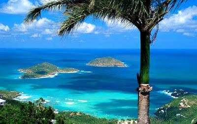 Sea Star St Thomas Virgin Islands