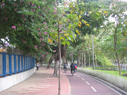 Biking under the Banyan trees