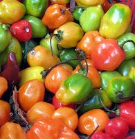 Habañero chilies