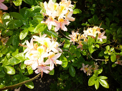 Azalea and Bee!