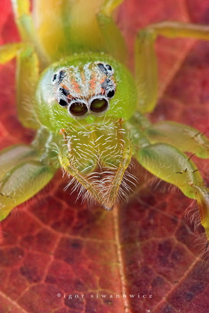 Cool Pictures of Alien Insects -  Insect Macro Photography Seen On www.coolpicturegallery.net