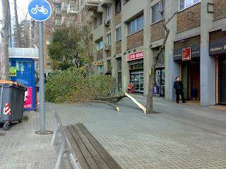 Árbol caído a causa del viento