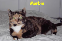 My Cat, Marbie