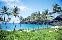 Coconut trees on Hawaiian beach
