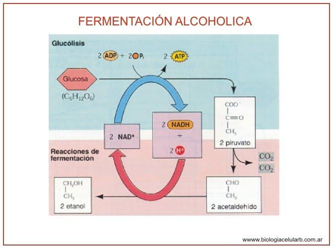 El método del tratamiento del alcoholismo esperal