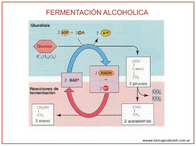 http://4.bp.blogspot.com/_jjYyBAB2xfg/TFNq45_jkHI/AAAAAAAAAAU/CNGxeGIcMTw/s1600/alcoholica.jpg
