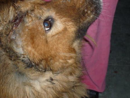Proteger zona sur novedades perros de la boca - Novedades para mascotas ...