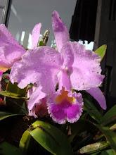 Mi flor preferida