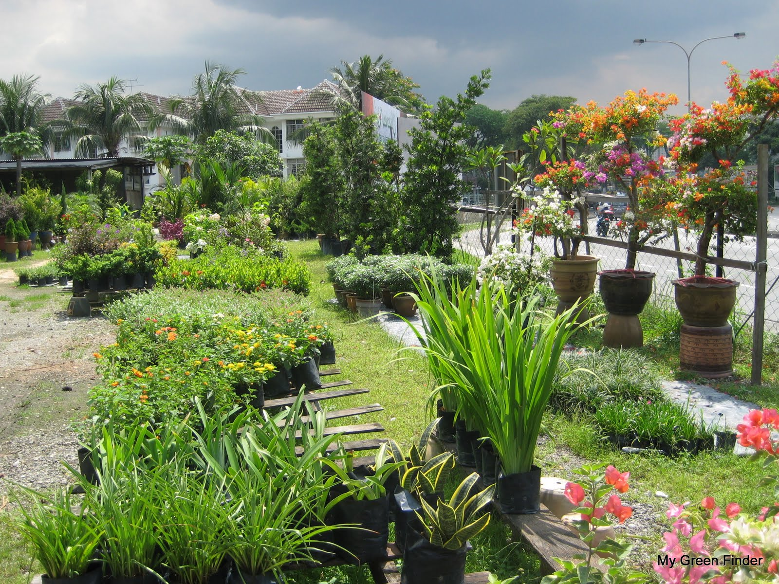 Fong Brothers Nursery Landscaping