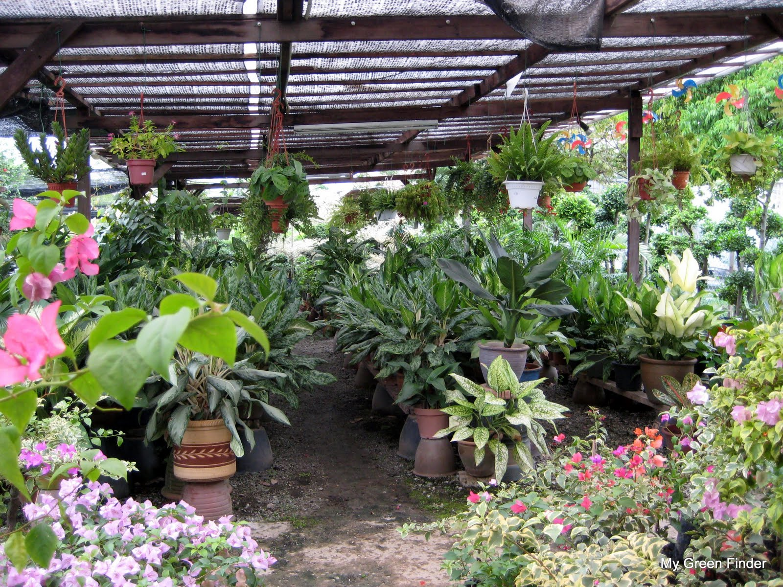 MY GREEN FINDER Plant Vendors Bukit Jalil Nursery