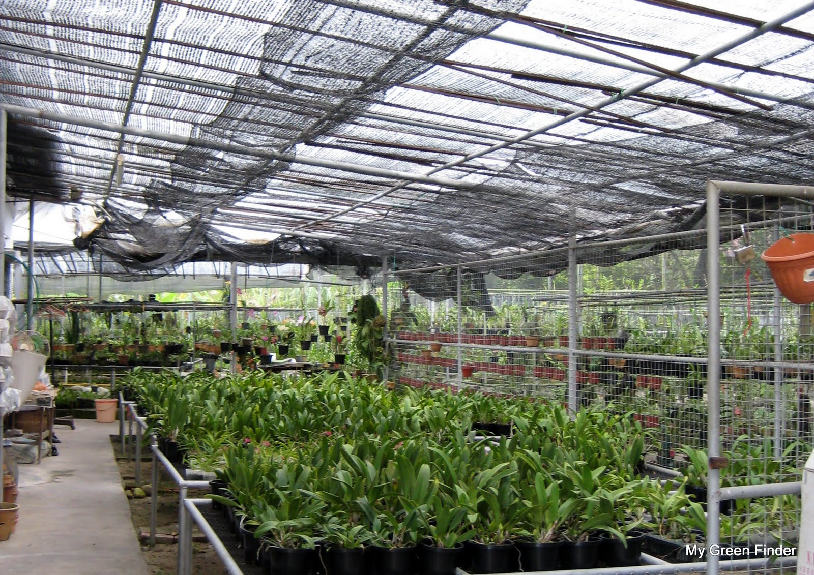 Life Style Orchids Nursery