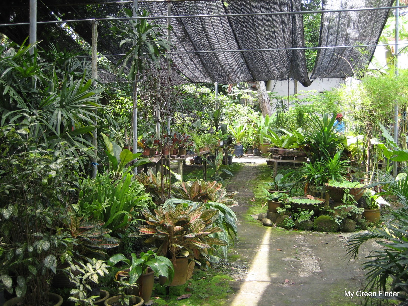 Plant nurseries near me nursery plants greenhouse nursery for Garden designers near me