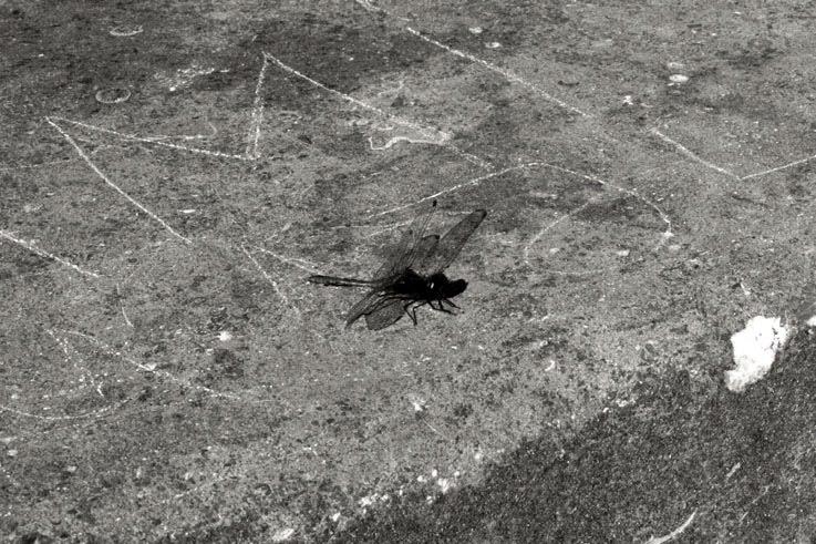 dragonfly, libellule