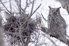 First Nest