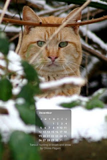 FREE Iphone / Smartphone wallpaper for December, the hunting cat