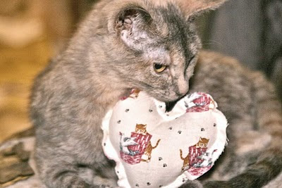 Dora the explorer kitten plays with her special Valentine's Day cat toy