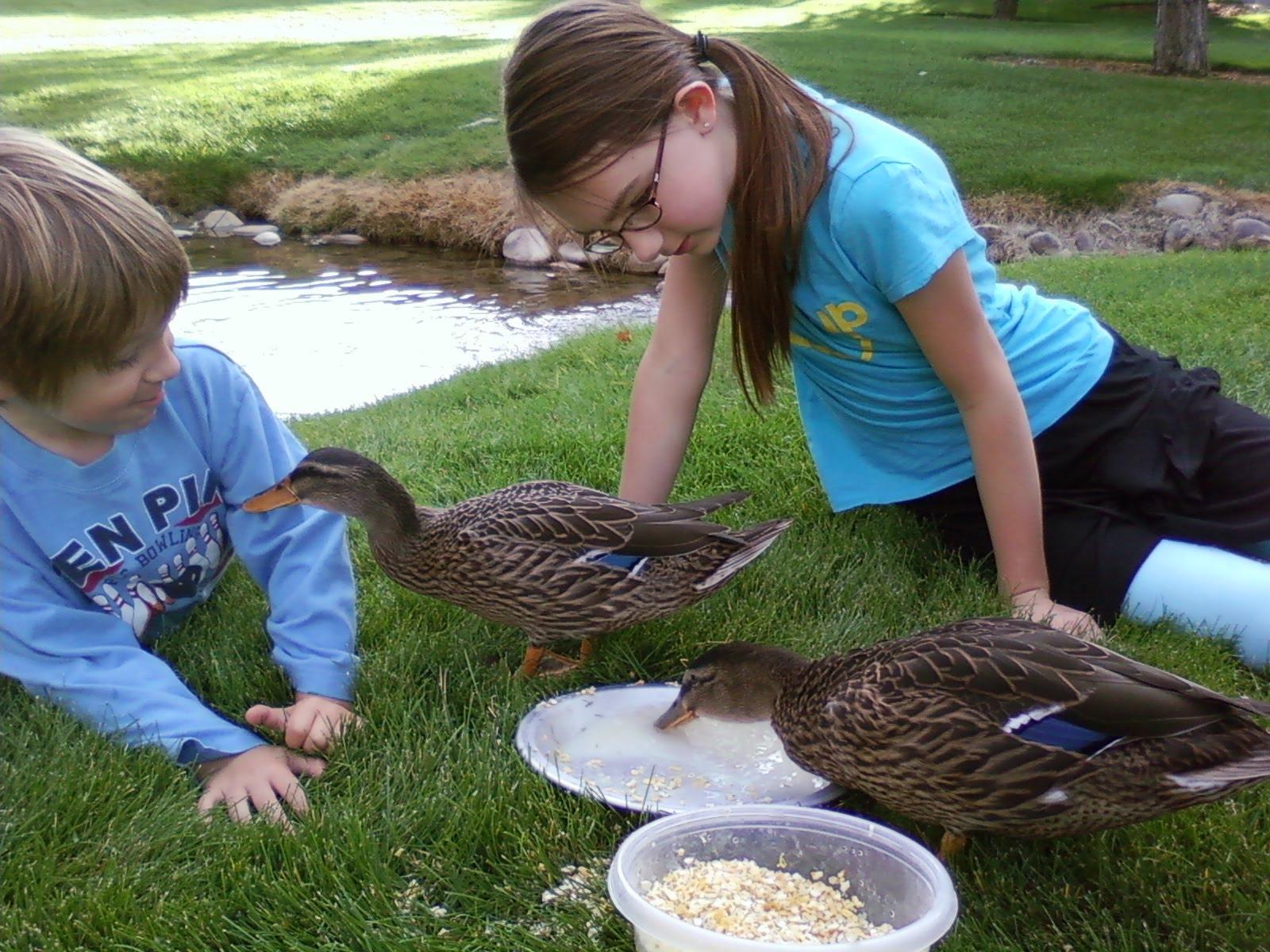 duck feed pellets