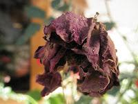 No vayas a mi tumba y llores de susana colucci incluye poema Hopi. Foto Muerte en rosa de Cronos J Mejía C