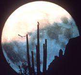 La Luna Llena y el Centaruo de susana colucci