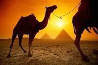 Lo acostumbrado... otra de camellos de susana colucci - Algo mas que Astrología