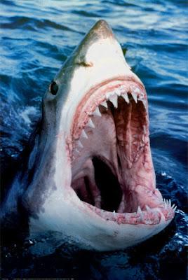 http://4.bp.blogspot.com/_jq1iXKQKta0/S1n1PPyYi5I/AAAAAAAADro/bD7m4sSoss4/s400/Great-White-Shark-Print-C10280885.jpeg