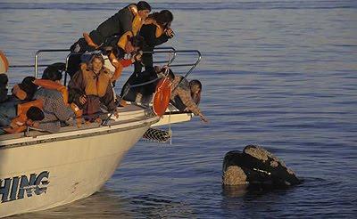 Avistagem de Baleias  de Costa e embarcado em Puerto Piramides Península Valdés