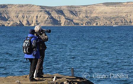 Avistagem de Baleias  de Costa e embarcado em Puerto Piramides